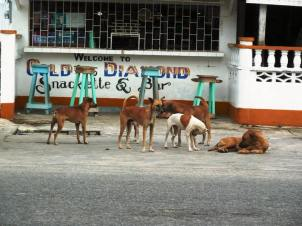 "One of the many packs of stray dogs hanging out in front of ""The Gold & Diamond Snackette and Bar"""
