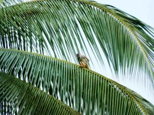 A monkey in a tree in the garden