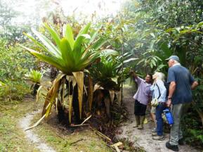 Inspecting a Giant Tank bromeliad