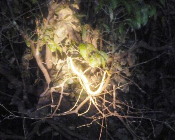 A snake overhangs the river at night