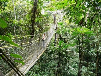 The Iwokrama canopy walk