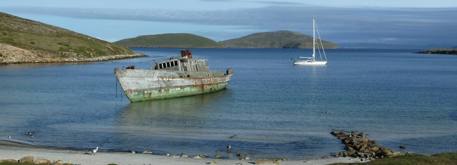 New Island, Falklands