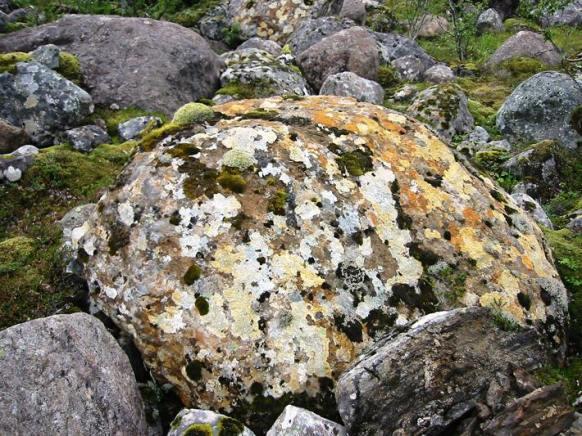 Lichen encrusted boulder